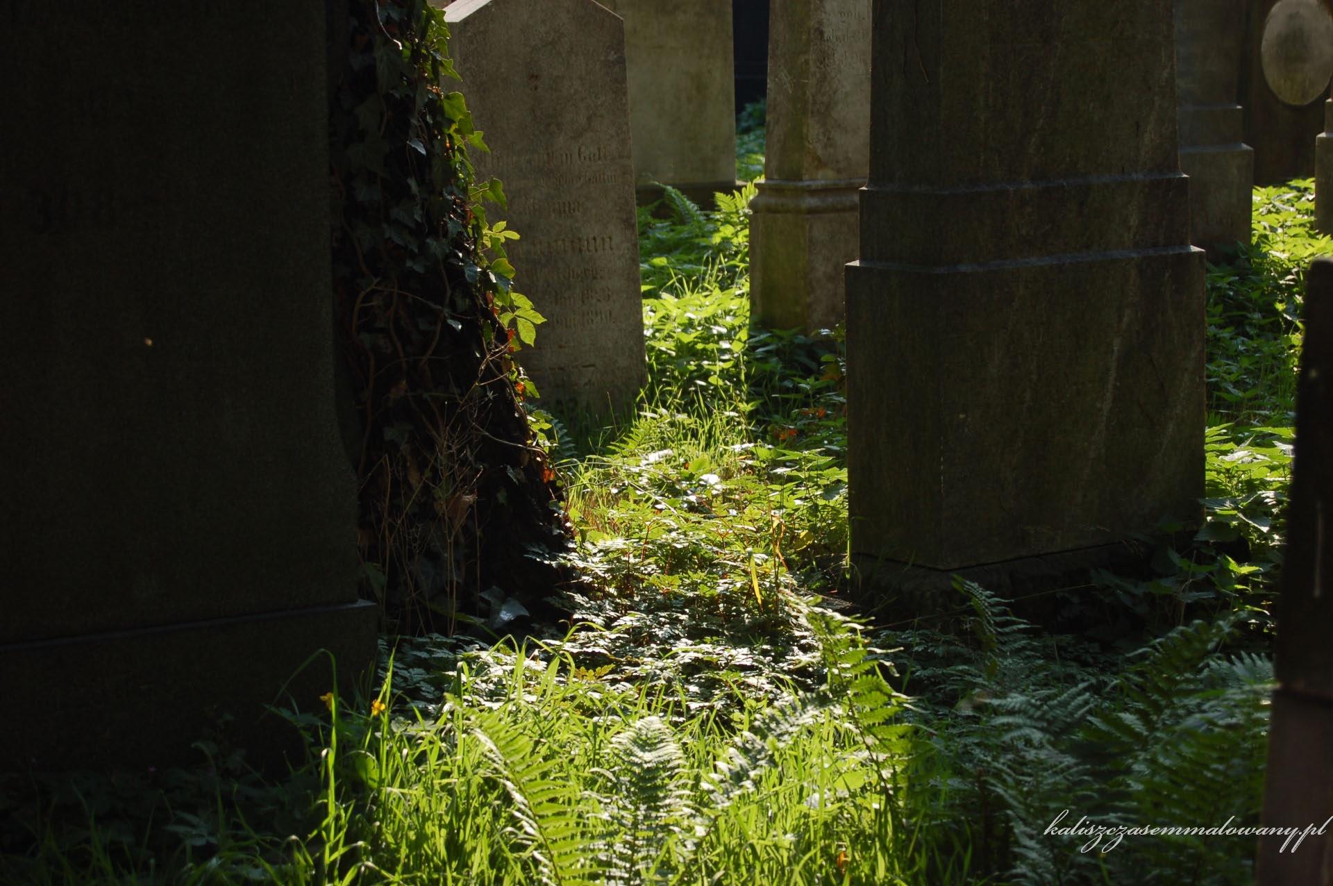 cmentarz_zyd_wr-17