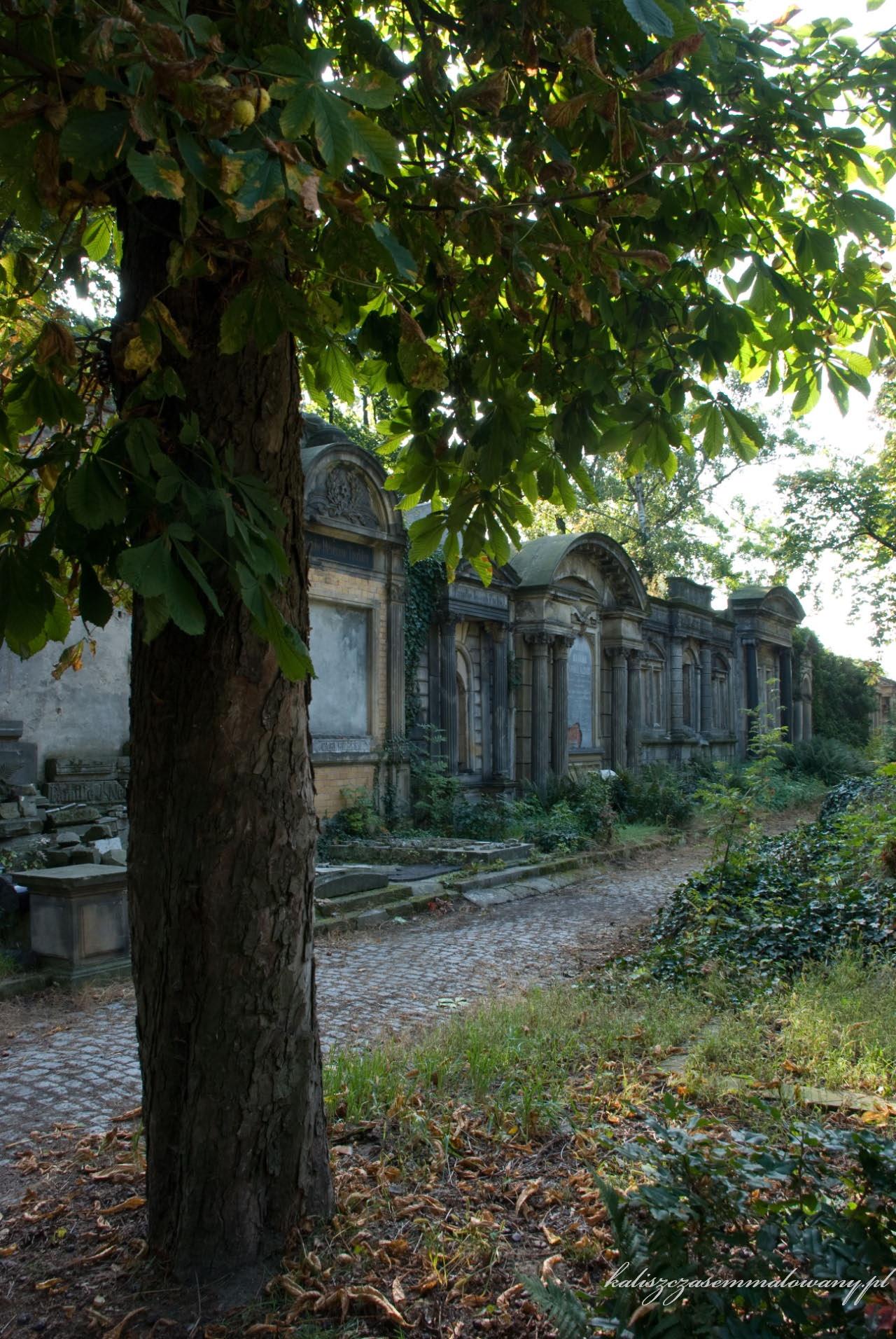 cmentarz_zyd_wr-18