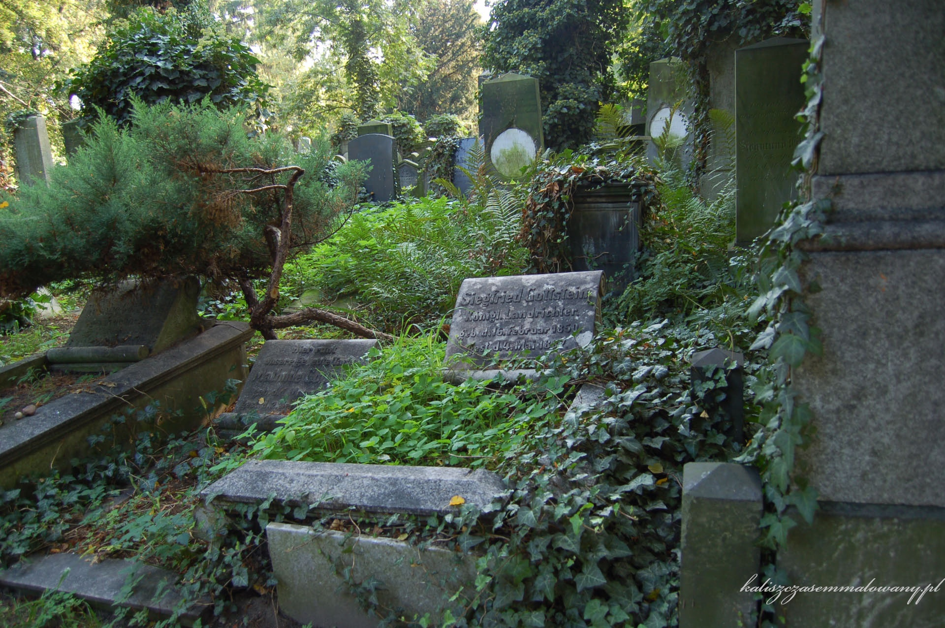 cmentarz_zyd_wr-31