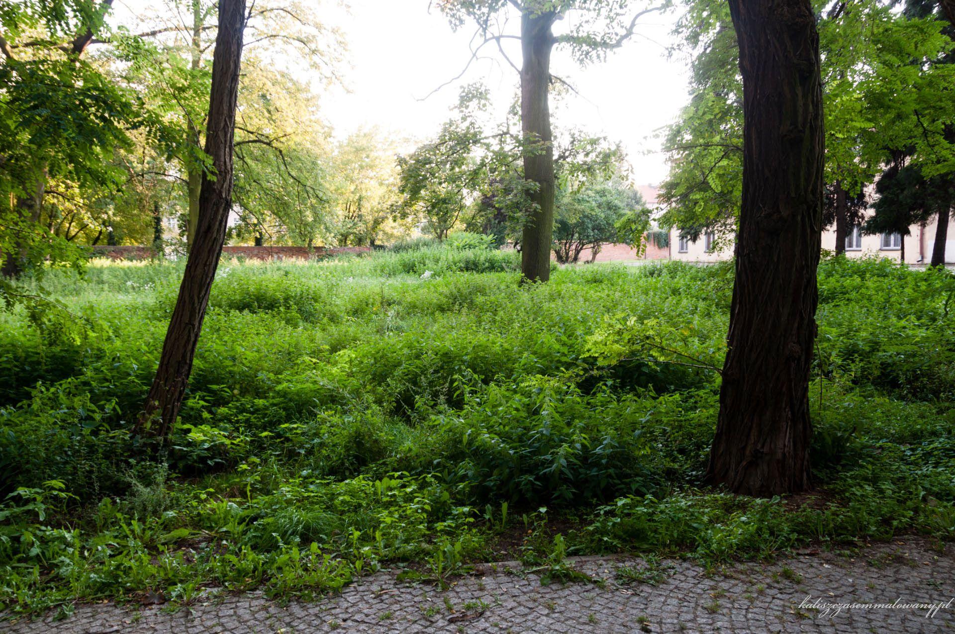 Ogrody Daragana-11