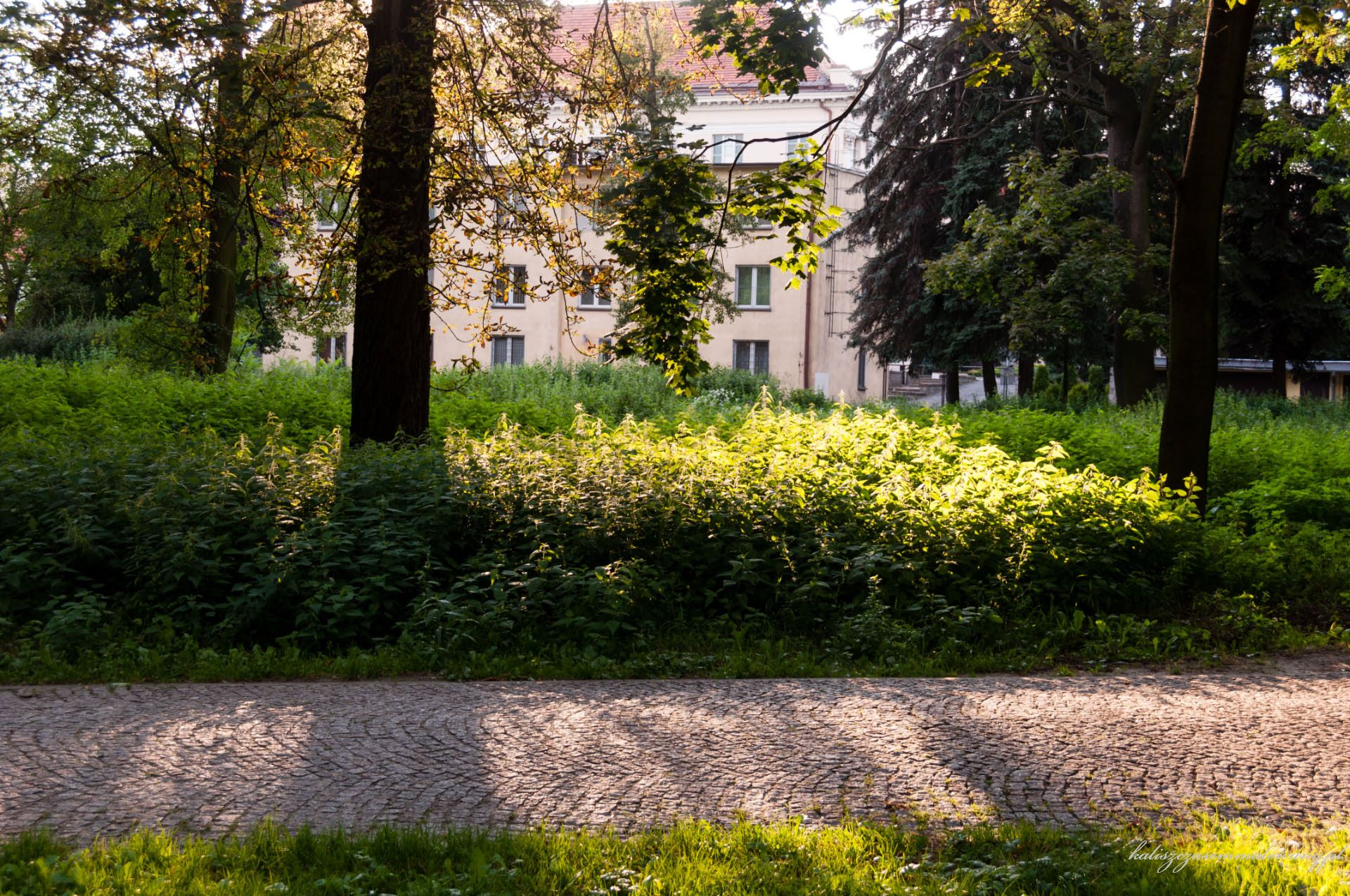 Ogrody Daragana-13