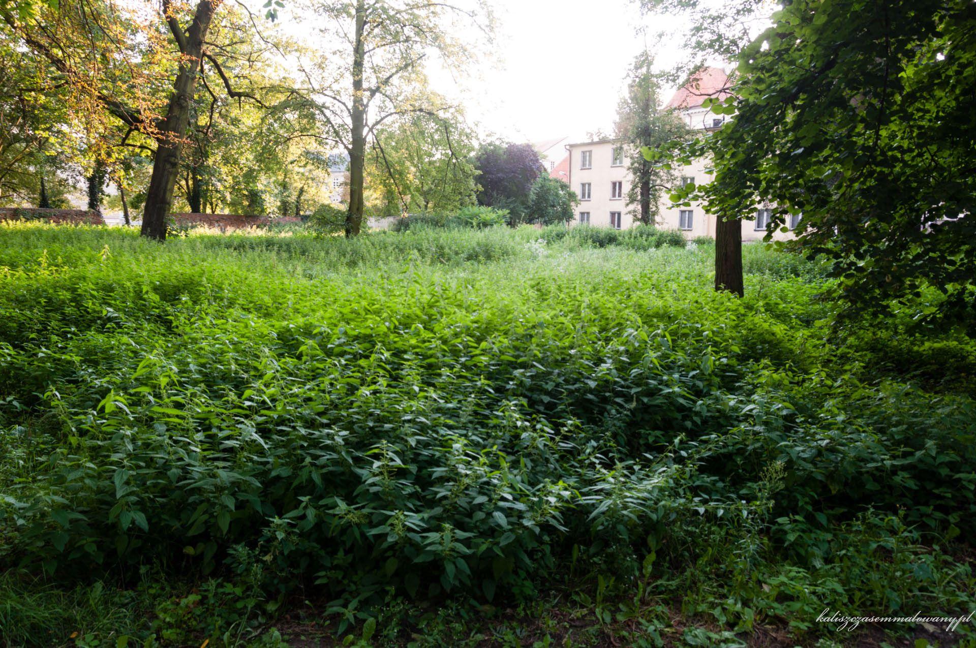 Ogrody Daragana-14