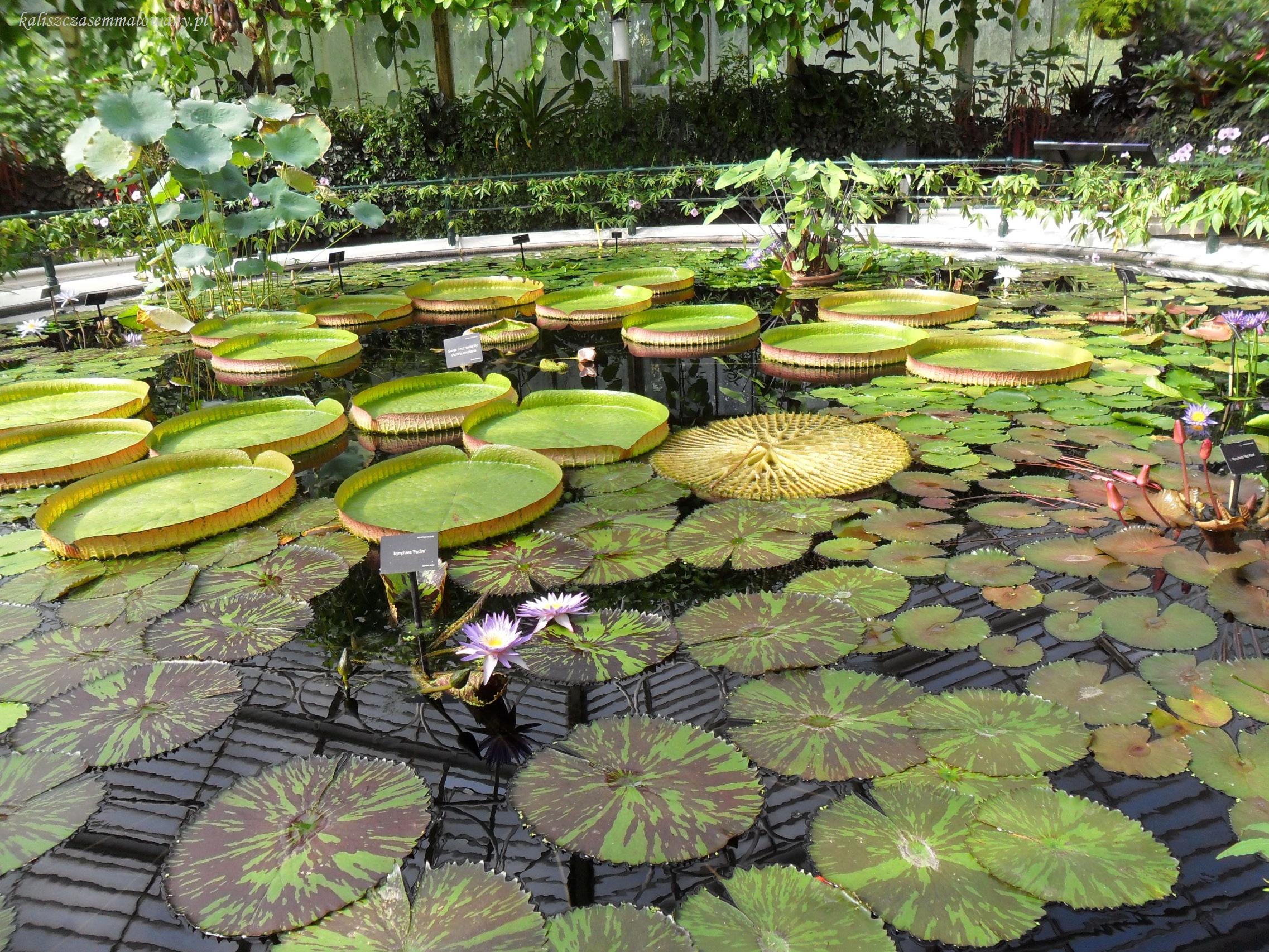 Kew_Garden-24