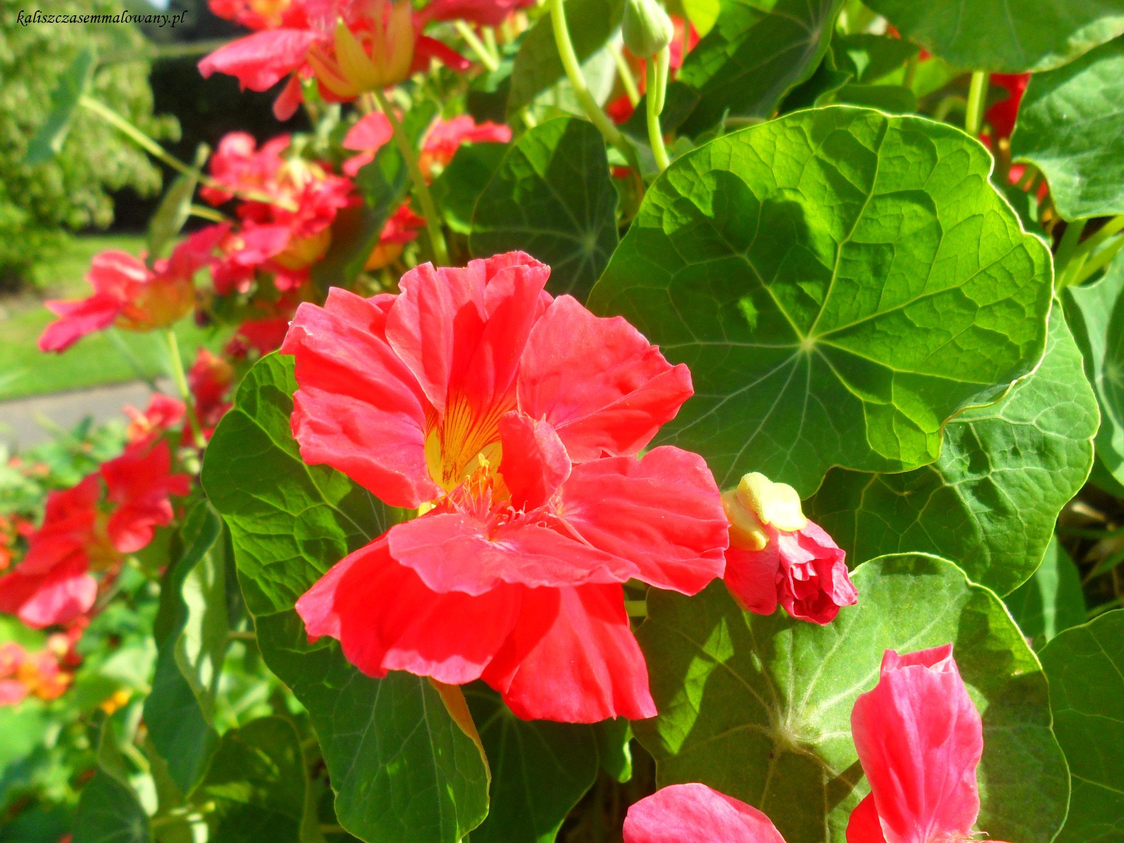 Kew_Garden-26